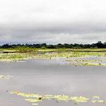 Die Wasserfläche ist in der Regenzeit ca 10 mal so groß wie in der Trockenzeit. Die Seen sind dann u. U. so groß, dass die Süsswasserhaie aus dem Nicaragua-See bis hierhin kommen.