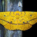 Diese hat eine Flügelspannweite von fast 20 cm.