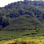 Es ist Kaffeeland auf 1500 m Höhe.