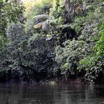 Wir fahren per Boot über den Guyabeno zur Urwaldlodge.
