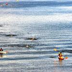 Der Schwimmwettbewerb am frühen Morgen. Die Schwimmer müssen deutlich mehr al 1 km schwimmen.