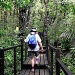 Die Wanderwege durch den Urwald sind bestens präpariert.