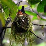 Gleich am Eingang ein Kolibrinest.