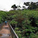 Über eine Brücke geht es in den Nationalpark Tenorio hinein. Von hier hat man einen schönen Blick auf die Baumkronen.