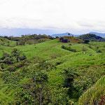 Graslandschaft auf dem Weg nach Boca Chica. Rinder sehen wir hier kaum, es ist eine extensive Weidewirtschaft.