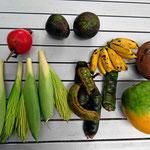 Unsere Marktausbeute. Die meisten Früchte kannten wir bislang nicht.