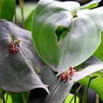 Im Orchideengarten gibt es eine unglaubliche Fülle verschiedener Orchideen. Nur ist es zielmich duster