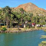 Auch Mulege ist eine Flussoase mit unendlichz vielen Palmen.