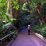 Der San Diego Zoo ist als Urwald aufgebaut mit den einzelnen Tiergehegen mitten im Wald. Es ist eine Lust, da durch zu spazieren.