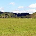 Gras bis zum Horizont ohne Rinder.