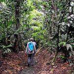 Spaziergang durch den Urwald von La Selva.