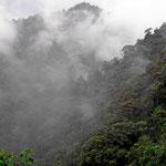 Der Urwald fasziniert uns immer wieder, selbst im Regen und Nebel.