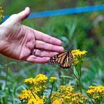 Die ersten  Schmetterlinge begrüßen uns.