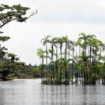 Die Bauminseln können nur deshalb überleben, da sie ein halbes Jahr lang trocken liegen.