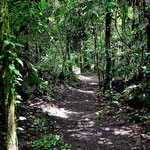 Spaziergang durch den Nationalpark. Auch hier war früher sicher Rinderland, d.h. der Wald ist noch jung. In vielleicht 300 Jahren wird ein richtgier Urwald daraus.