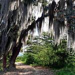 Schon vor dem Eintritt zum Naturreservat begrüßen uns die ersten Zauberbäume.