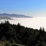 Blick vom Cape Arago State Park auf den Nebel.