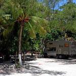 Der Stellplatz unter den Palmen.