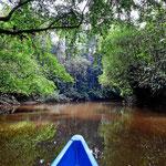 Wir haben es vor allem genossen, wenn das Boot im Schritttempo den Fluss entlang gleitet.