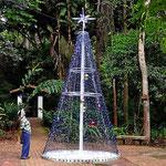 Ein typischer kolumbianischer Weihnachtsbaum in einem Park in San Gil.