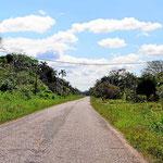 Die Landschaft auf der Fahrt vom Baboon Center nach Belize City.