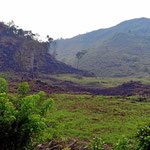 Urwaldrodung. Zurück bleibt ein steiniger Boden mit wenig Erde.
