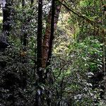 Und immer wieder bin ich vom Wald begeistert. Nur wie nimmt man so etwas auf???