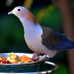Es gibt mehrere Großvolieren, in die man hineinkommt, der ideale Platz zum Fotografieren von Vögeln.