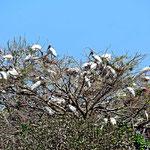 Ein Vogelbaum bei der Weiterreise.