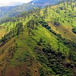 Anstelle von Urwald gibts Graslandschaft.