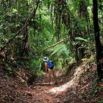 Der Park hat perfekt gemachte Wanderwege, man kann endlos im Urwald wandeln.