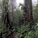 Wir sind beide begeistert vom Nebelwald. Es ist ein wunderbarer Primärurwald.