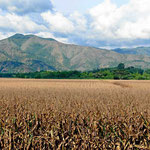 Außerhalb des Naturschutzgebietes typische Kolumbienlandschaft. Maisfelder bis zum Horizont und kahle Berge.