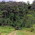 Und dazu hat die Hosteria einen Privaturwald.