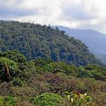 Die letzten Berge vor Amazonien, alles mit wunderschönen Nebelwäldern bedeckt.