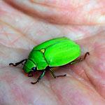 Und ein grüner Käfer, dies ist nur eine kleine Auswahl der Ergebnisse der Nachtpirsch.