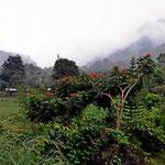 Fahrt entlang des Rio General Richtung San Gerando, mittlerweile regent es wieder.
