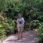 Der Belize Zoo ist ein Dschungel-Zoo mit schönen Wegstücken zwischen den einzelnen Gehegen.
