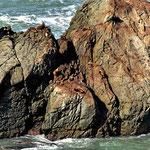 Seelöwen hier scheinen wahre Kletterkünstler zu sein. Der oben rechts scheint ein Seelenverwandter von Reinhold Messner zu sein.