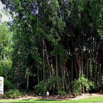 Auf der Fahrt nach La Selva treffen wir auf diesen Bambuswald.