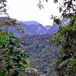 Blick auf den Nebelwald vom Resort aus.