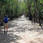 Zwischen den einzelnen freigelgten Stellen gibt es lange Wege durch den Wald.