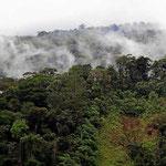 Die Nebelwälder am Gebirgsabbruch.
