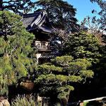 Im japanischen Teegarten, ebenfalls im Golden Gate Park.