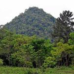 Und der Hausberg der Finca, noch mit Urwald bedeckt. In der Umgebung sind die alle gerodet - so erzeugt man Karstgebiet.