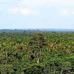 Blick über den Guyabeno Nationalpark, Urwald bis zum Horizont.
