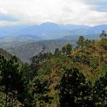 Zentralhonduras in der Nähe des Yojoa-Sees ist sehr gebirgig. Wir fahren hoch bis auf fast 2000 m. Der Wald besteht hier aus Pinien. Wir fühlen uns nicht wie in den Tropen.