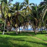 Unser Übernachtungsplatz im Natipnalpark Tayrona - unter Palmen.