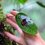 Auf der Jagd nach Orchideen, dies ist z.B. eine.