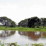 Überall Wasser und kleine Nebenflüsse des Rio Magdalena.